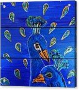Peacock Vi Acrylic Print