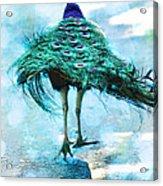 Peacock Walking Away Acrylic Print