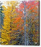 Peak And Past Foliage Acrylic Print