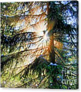 Peeking Through God's Shadow Acrylic Print