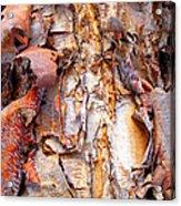 Pealing Bark Upclose Acrylic Print