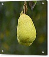 Pear Wine Acrylic Print