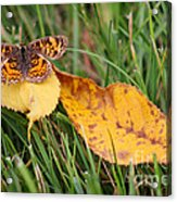 Pearl Crescent Butterfly On Yellow Leaf Acrylic Print