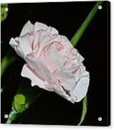 Pearl Spotlight Acrylic Print