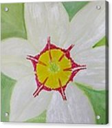 Pearl White Flower Acrylic Print