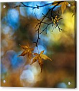Pearlescent Acers Acrylic Print