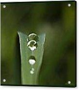 Pearly 2 Acrylic Print