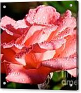 Pearly Petals Acrylic Print