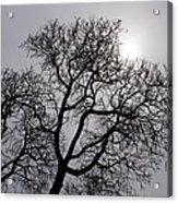 Pearly Silver Filigree On The Sky  Acrylic Print by Georgia Mizuleva
