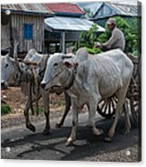 Peasant And Oxcart Acrylic Print