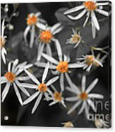 Pedals And Pollen Acrylic Print