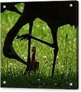 Peek-a-boo Crane Acrylic Print