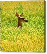 Peek A Boo Deer Acrylic Print