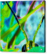 Peek-a-boo Grass Hopper Acrylic Print by Rebecca Flaig