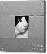 Peek A Boo Kitty Acrylic Print