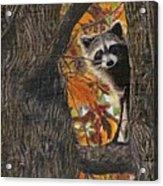Peeking Bandit Acrylic Print
