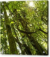 Peeking In Costa Rica Rain Forest Acrylic Print