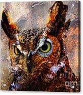 Peeking Owl Acrylic Print