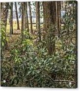 Peeking Through The Trees Acrylic Print