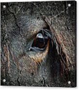 Peering Out Acrylic Print