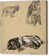 Pekinese, Chow And Spaniel, 1930 Acrylic Print