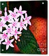Pelargonium Graveolens II Acrylic Print