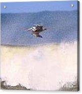 Pelican 3915 Acrylic Print
