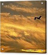 Pelican Against The Golden Sky Acrylic Print