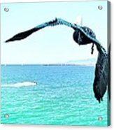 Pelican And Jetski Acrylic Print by Brian D Meredith