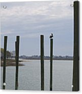 Pelican And Pilings On The Inlet Acrylic Print