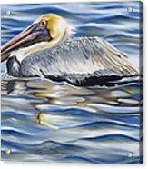 Pelican At Cedar Point Acrylic Print