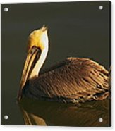 Pelican At Dark Acrylic Print