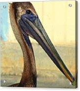 Pelican Bill Acrylic Print
