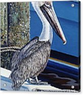 Pelican Blues Acrylic Print