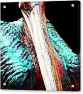 Pelican By Sharon Cummings Acrylic Print by William Patrick