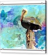 Pelican Colours Acrylic Print