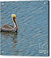 Pelican Drifting On Rippled Water Acrylic Print