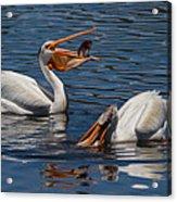 Pelican Fishing Buddies Acrylic Print by Kathleen Bishop