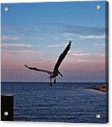 Pelican Flight Hatteras 2/11 Acrylic Print