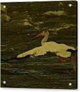 Pelican Flying Low Acrylic Print