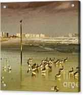 Pelican Haven Acrylic Print