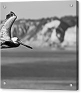 Pelican In Black And White Acrylic Print