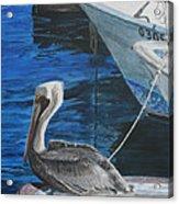 Pelican On A Boat Acrylic Print