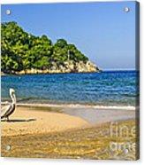 Pelican On Beach Acrylic Print