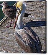 Pelican On Dock Acrylic Print