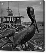 Pelican On Pier Acrylic Print