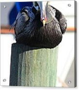 Pelican On Piling Acrylic Print
