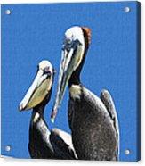 Pelican Pair At Oceanside Pier Acrylic Print