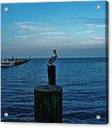 Pelican Pamlico Sound Hatteras 2/11 Acrylic Print
