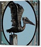 Pelican Paradise Acrylic Print